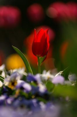花の美しい季節です。