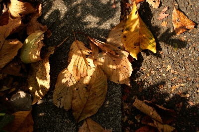 秋ですねぇ...