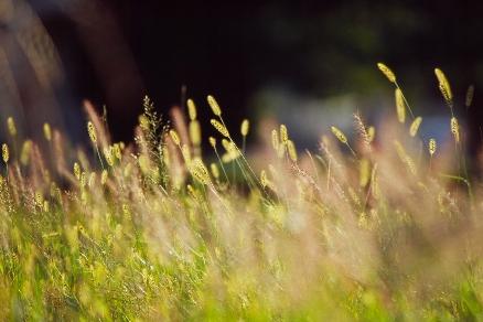 雑草にも輝く瞬間はある。