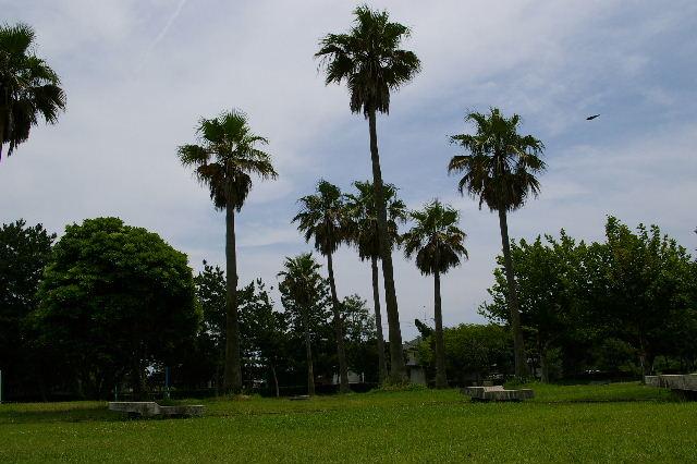 遠州浜公園