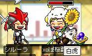 Maple001.jpg