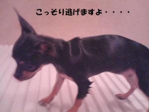 20070723190110.jpg