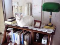 置き物ネコ