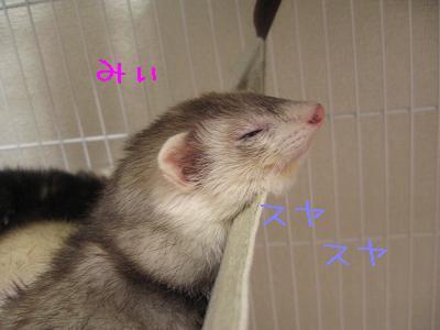 20060528-2.jpg
