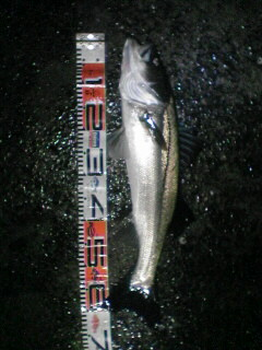 71cm。