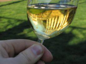 275px-Chardonnay-UVa.jpg