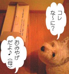2007.06.03-おみやげ①