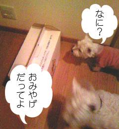 2007.06.03-おみやげ②