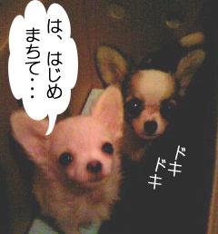 2007.06.03-おみやげ③