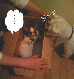 2007.06.03-おみやげ④
