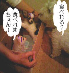 2007.06.03-おみやげ⑤