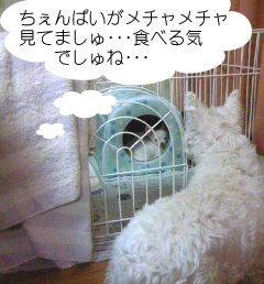 2007.06.03-ちぇんぱい①