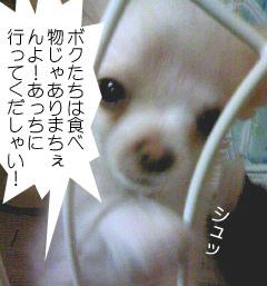 2007.06.03-ちぇんぱい②