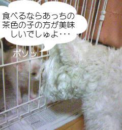 2007.06.03-ちぇんぱい③