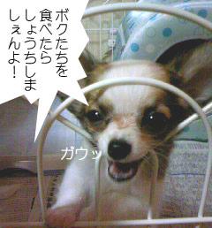 2007.06.03-ちぇんぱい④
