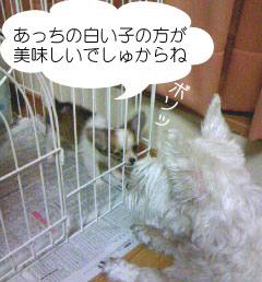 2007.06.03-ちぇんぱい⑤