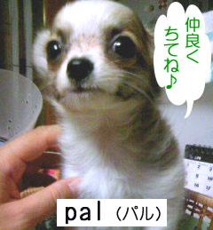 2007.06.05②
