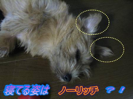 IMG_4057-1.jpg