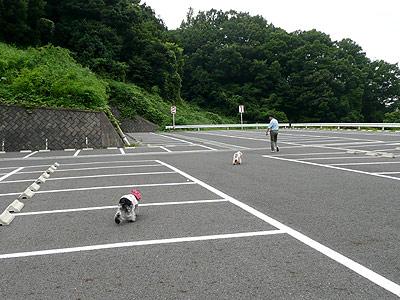 恒例の駐車場運動会