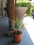 piante_fuori