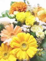 tomco-flower