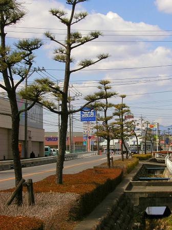 倉賀野の松並木