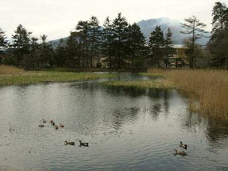 雨宮池と浅間山