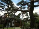 宝珠寺と赤松