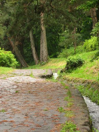 笠取峠松並木の道