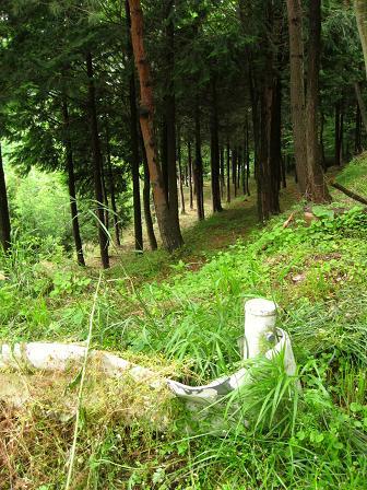 段丘状のヒノキ林に消失する旧道
