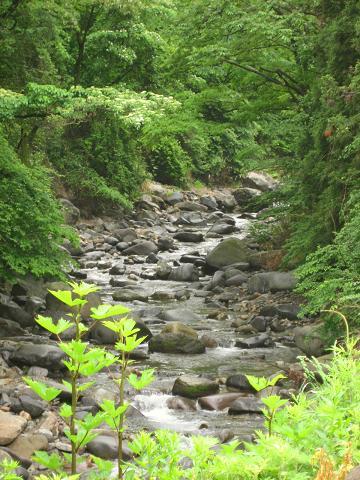 依田川に沿って山中へ