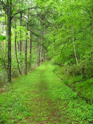 新緑が清々しい旧中山道