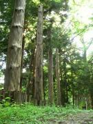 麻衣廼神社の御柱