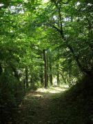 諏訪坂の旧道