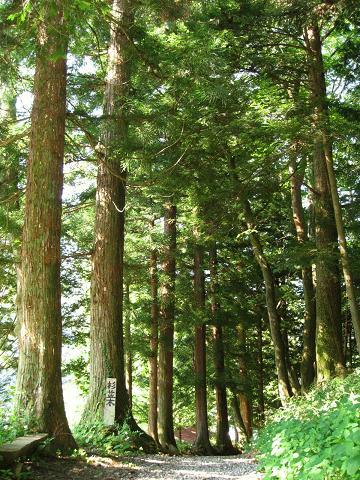 古中山道の杉並木