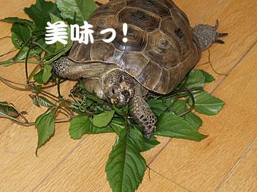 060623_yabu5.jpg