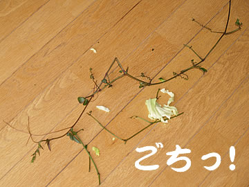 060623_yabu9.jpg