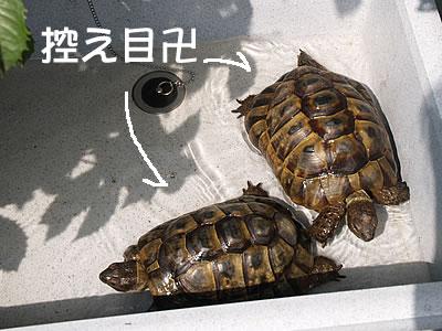 060627_hisumika2.jpg