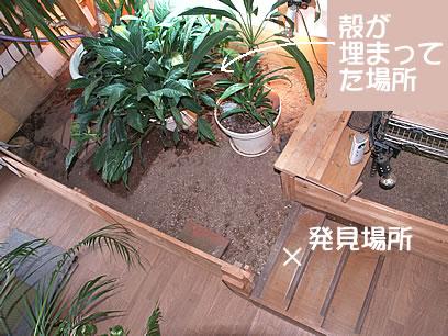 060820_okunaifuka4.jpg