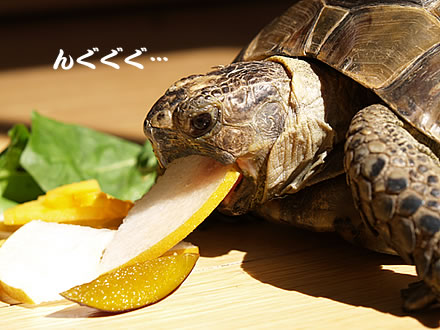 061009_fruit1.jpg