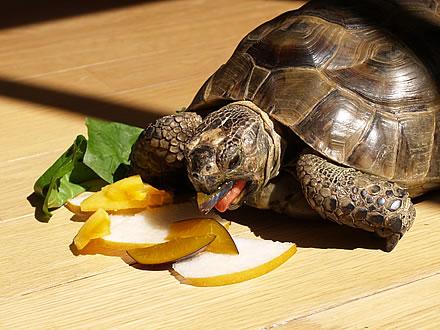 061009_fruit3.jpg