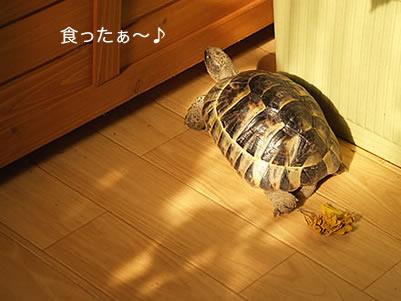 070125_koyuki1.jpg