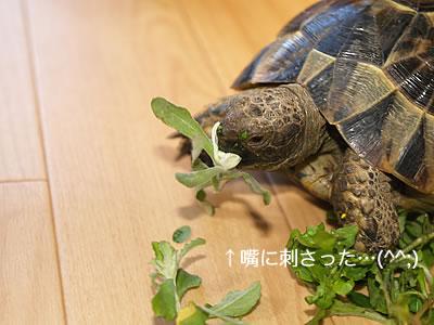 070126_chichiko1.jpg