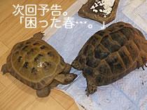 070126_yokoku.jpg
