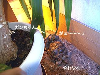 070202_ganmube1.jpg