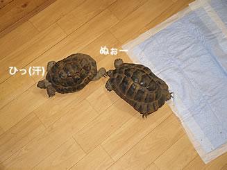 070202_sumimube1.jpg