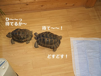 070202_sumimube2.jpg