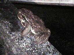 070209_frog.jpg