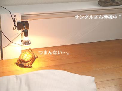 070218_kohaku2.jpg