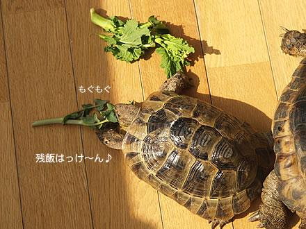 070226_jyuhei1.jpg